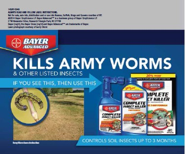 Lawn damage by Army Worms